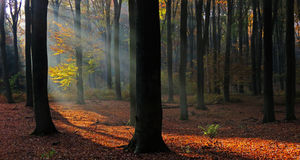 Light in the dark wood Royalty Free Stock Image