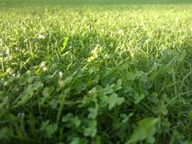 The light is delicately touching the grass. I love to watch the details of the normal things Royalty Free Stock Photos
