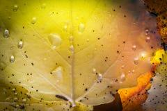 Light and dew on autumn leaf. Stock Photos