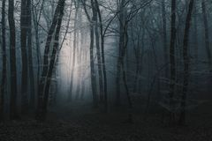 Light in the distance of the trail through dark creepy foggy for. Est royalty free stock photos
