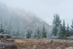 Light dusting of snow in the forest with heavy fog Stock Photos