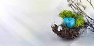 Light Easter background,nest,eggs,willow,sun rays,white,blue,brown,holiday,religion,Easter. Background  blue eggs  brown  card  holiday  color  colorful copy stock photo