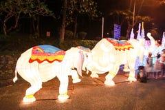 Light elephant. Walk along the road Royalty Free Stock Photography