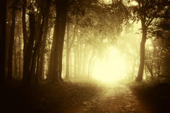 Light at the end of a forest road in autumn Stock Photo