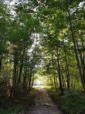 Light At The End Of The Tunnel - Path through Forest Trees with. Light At The End Of The Tunnel - a gravel path through Forest Trees leads to a grassy opening royalty free stock photography