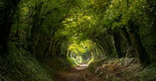 Light at the end of the tunnel. Halnaker tree tunnel in West Sussex UK with sunlight shining in through the branches.