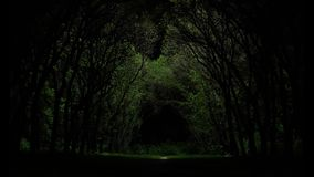 A light in the end of a tunnel. Magic game of light and shadow in forest. Backlight from the drone. 1000w LED. 90.000. Lumen. HD stock footage