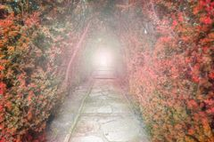 Light at the end of the tunnel. Red tunnel of trees with light a royalty free stock photos