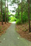 Light at the End of the Walking Trail Through Trees royalty free stock images