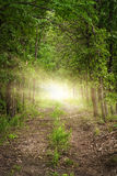 Light at the end of a wooded forest path. Forest path, heavily wooded, with a light at the end, maybe a clearing, signifying hope Royalty Free Stock Image