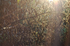 Light evening shade leaves dry texture Stock Photos