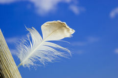 Light feather in the breeze Stock Photo