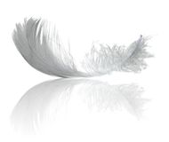 Light feather reflection Stock Photography