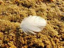 Light Feather on the Sand. Light Feather near the River in Capital City of Lithuania Royalty Free Stock Photos