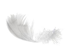 Light feather on white Royalty Free Stock Photography