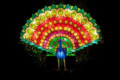 Light festival of Peacock Royalty Free Stock Photos
