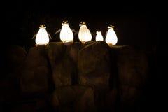 Light festival of penguins Royalty Free Stock Photos