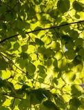 Light filtering through vegetation Royalty Free Stock Images