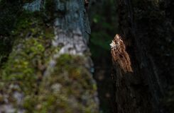 Light finds a way. Stock Image