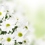 Light Floral Flower Border Royalty Free Stock Photography