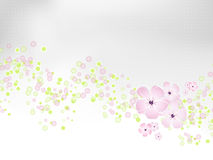 Light flower background - spring design Royalty Free Stock Photo