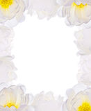 Light flowers frame isolated on white Royalty Free Stock Image