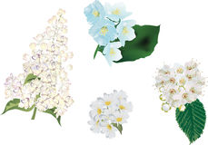 Light flowers isolated on white background Stock Photos