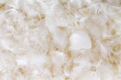 Light fluffy white feather background texture. Of goose or duck down in a full frame view conceptual of luxury and elegance Royalty Free Stock Photo