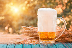 Light foamy beer in a glass on natural background Stock Photography