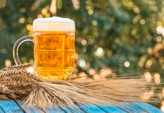 Light foamy beer in a glass on natural background Royalty Free Stock Image