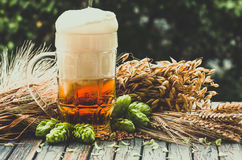 Light foamy beer in a glass on natural background Stock Image
