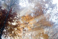 Light and Fog. Light streaming through woods in all stock image