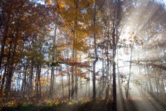 Light and fog. Light streaming through woods in all Royalty Free Stock Photo
