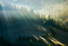 Light through fog in forest on hill. Gorgeous nature background in autumn stock photo