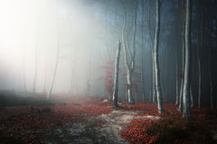 Light through the fog into the forest Stock Photography