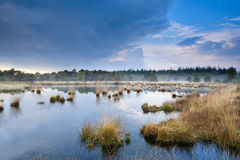 Light fog over swamp after the rain Royalty Free Stock Photos
