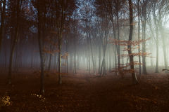 Light into foggy forest Royalty Free Stock Photo