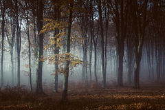 Light into foggy forest. Gloomy dark autumn day. Filtered image Royalty Free Stock Images