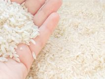 Light food background with white small long asian rice in hand stock photo