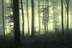 Light in the forest. Light in a misty forest Stock Photos