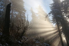 Light in forest Stock Photos
