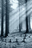 Light in the  forest. Lit forest shrouded in fog Stock Images