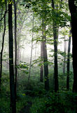 Light in the Forest Royalty Free Stock Photos