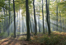 Light in the forest Stock Photos