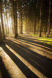 Light in Forest Stock Image