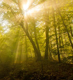 Light in the forest Royalty Free Stock Photography