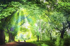 The light through the forest. The light on the Road through the forest Royalty Free Stock Photography