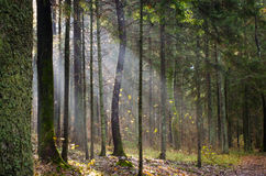 Light in forest Royalty Free Stock Photo