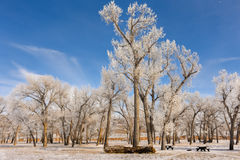 Light Through Frosty Trees. Deer Lodge Park Campground In Colorado Stock Image