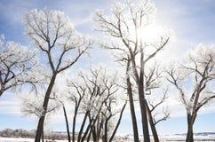 Light Through Frosty Trees Stock Photos